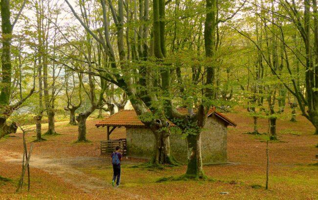 Aiako Harriak Parke Naturala: Altzibar, Oianleku, Zaria, Ozentzio, Altzibar